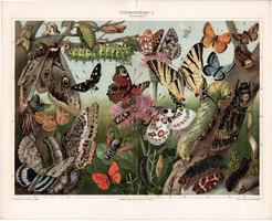 Pillangók I. (3), 1908, színes nyomat, német nyelvű, eredeti, lepke, pillangó, hernyó, halálfejes