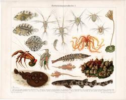Tenger, hal, rák (3), színes nyomat 1904, német nyelvű, litográfia, eredeti, régi, fejlődés, óceán