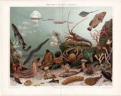 Akvárium (3), litográfia 1903, német nyelvű, eredeti, nyomat, tengervízi, hal, medúza, óceán, rák
