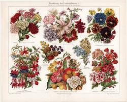 Kerti virágok,litográfia 1906, színes nyomat, német nyelvű, eredeti, növény, virág, szegfű, régi