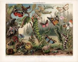 Lepke, bogár, hernyó (3), litográfia 1908, színes nyomat, német nyelvű, eredeti, pillangó, védelem