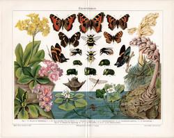 Darwinizmus (3), színes nyomat 1906, német, litográfia, eredeti, lepke, pillangó, virág, fejlődés
