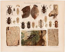 Erdei kártevők (bogár) I, litográfia 1898, német nyelvű, eredeti színes nyomat, hőscincér, szú