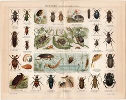 Bogarak (1), 1894, litográfia, színes nyomat, eredeti, magyar, bogár, fedelesszárnyú, futrinka
