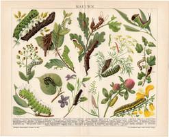 Hernyók (2), litográfia 1894, színes nyomat, német, Brockhaus, lexikon melléklet, állat, hernyó, báb