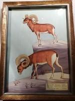 Muflonok - Vadászat Akvarell