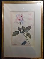"""""""Rózsa"""" Akvarell 1960-ból"""