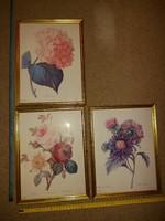 P.J.Redoute, 3 darab dekoratív virág, szép antikolt keretben, művészi nyomatok