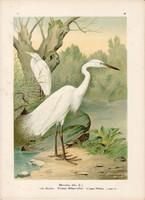 Nagy kócsag (7), litográfia 1897, eredeti, 29 x 39 cm, nagy méret, madár, színes nyomat, Herodias