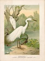 Nagy kócsag (5), litográfia 1897, eredeti, 29 x 39 cm, nagy méret, madár, színes nyomat, Herodias