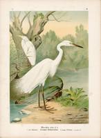 Nagy kócsag (3), litográfia 1897, eredeti, 29 x 39 cm, nagy méret, madár, színes nyomat, Herodias
