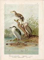 Bakcsó (5), litográfia 1897, eredeti, 29 x 39, nagy méret, madár, nyomat, vakvarjú, Nycticorax Nyc.