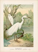 Nagy kócsag (6), litográfia 1897, eredeti, 29 x 39 cm, nagy méret, madár, színes nyomat, Herodias