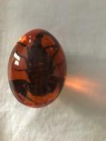 Különleges Litván skorpió öntött borostyán tojásban gyűjtői darabb.