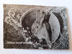 Retro húsvéti képeslap 1963 nyuszis levelezőlap