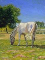 Legelő Ló 70x50 cm