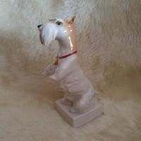 Német foxi kutya