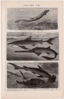 Halak VII. és VIII., egy színű nyomat 1893, német nyelvű, Brockhaus, állat, hal, tenger, cápa