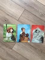 Kutyás képeslapok