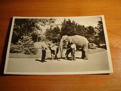 Állatpark-Hamburg-Afrikai elefánt