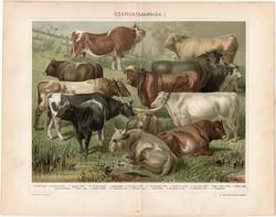 Szarvasmarhák (12), 1898, litográfia, színes nyomat, eredeti, magyar, bika, ökör, tehén, marha
