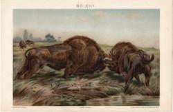 Bölény, litográfia 1894, színes nyomat, eredeti, magyar, Pallas, állat, Európa, lexikon melléklet