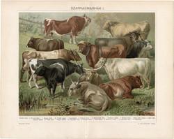 Szarvasmarhák (13), 1898, litográfia, színes nyomat, eredeti, magyar, bika, ökör, tehén, marha