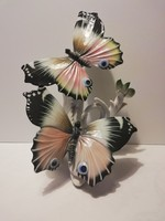 Hatalmas, csodaszép ENS pillangók