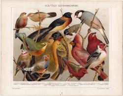 Külföldi szobamadarak (12), 1896, litográfia, színes nyomat, eredeti, magyar, madár, pinty, régi