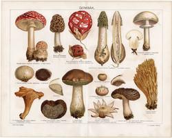 Gombák, litográfia 1894, magyar nyelvű, eredeti, színes nyomat, gomba, szarvagomba, csiperke, gerben