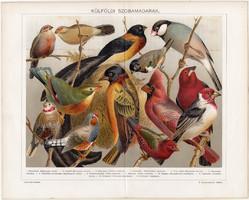 Külföldi szobamadarak (13), 1896, litográfia, színes nyomat, eredeti, magyar, madár, pinty, régi