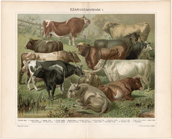 Szarvasmarhák (14), 1898, litográfia, színes nyomat, eredeti, magyar, bika, ökör, tehén, marha