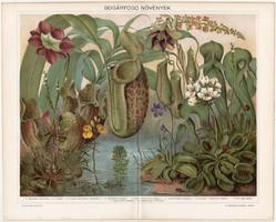 Bogárfogó növények, 1894, litográfia, színes nyomat, eredeti, magyar nyelvű, hízóka, légycsapó, régi