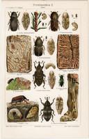 Erdei rovarok II., színes nyomat 1906, német nyelvű, litográfia, eredeti, bogár, erdő, levél, régi