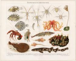 Tenger, hal, rák (4), színes nyomat 1895, német nyelvű, litográfia, eredeti, régi, fejlődés, óceán