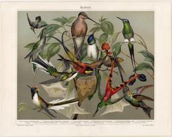 Kolibrik, litográfia 1906, színes nyomat, eredeti, német, lexikon melléklet, kolibri, madár, régi