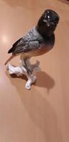 ENS porcelán madár