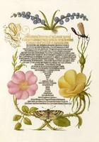 Aranyozott kalligráfia botanikai illusztráció szépírás jácint vadrózsa 16.sz-i antik kézirat reprint
