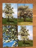 4 db természet, FA, évszak képeslapok