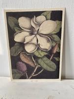 Botanika illusztrácio
