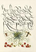Díszes kalligráfia növény rajz illusztráció pók ribizli borzaska darázs 6.sz antik kézirat reprint
