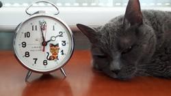 Régi ébresztő óra cica /macska eredeti dobozában