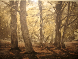 Quality at a gift price! Edvi illés aladár / 1870-1958 /: beech forest, colored etching