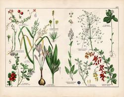 Vörös áfonya, őszi kikerics, sóskaborbolya, sóska, litográfia 1887, eredeti, növény, virág nyomat