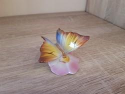 Drasche pillangó,  lepke.
