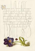 Mira Calligraphiae Monumenta kézirat díszes szöveg reprint pöttyös katica bogár háromszínű árvácska