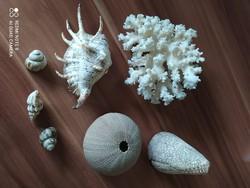 Korall és kagylók
