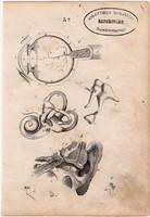 Anatómia III., litográfia 1852, német, 11 x 16 cm, könyv melléklet, egyszín nyomat, szem, fül, ember