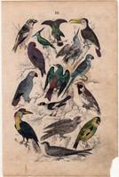 Madár, litográfia 1852, színes nyomat, német, 11 x 16 cm, könyv melléklet, eredeti, állat, madarak