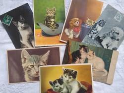 7 db antik/vintage francia, német, belga cicás képeslap/üdvözlőlap, cica, kutya